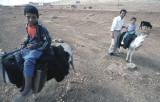Harran ride 04