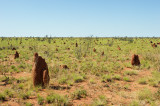 _Omnipresent termite mounds