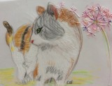 Cat pencil drawing on parchment