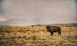 Cimarron & New Mexican Prairie