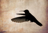 Recent Hummingbird Images