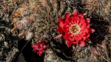 Succulents, Cactus & Other Spiny Plants