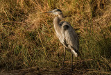 Wildlife of Bosque Del Apache & the Rio Grande River Valley