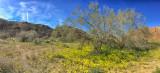 Joshua Tree Spring '17