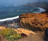 Wild Coast
