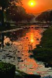 Water Lily Sunrsie