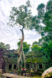 Giant Tree Roots Have Overrun Many Sites