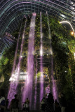 World's Tallest Indoor Waterfall , The 'Cloud Forest'