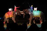 Elephants in Mock Battle