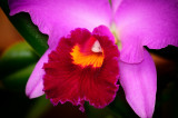 Orchid 043