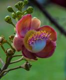 Exotic Botanicals