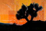 Joshua Tree Vivid Abstract