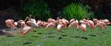 Flamingo Cluster