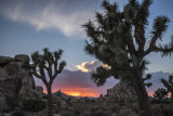 Joshua Tree Park: 4 Seasons