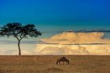 East African Safari