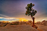 Joshua Tree Park: 4 Seasons