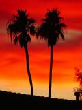 Palm Springs / Coachella Valley CA