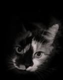 A Cat Named Fidgit