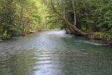 18 ohanapecosh river