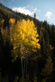 Fall in Little Cottonwood Canyon, Utah