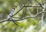 wild_birds_of_southern_california