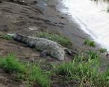 Croc on the River Bank.jpg