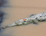 The Crocodile and the Butterfly.jpg