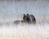 Pelican Valley Sow and Cub.jpg