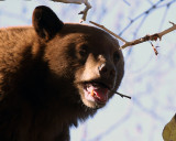 Bear Face.jpg