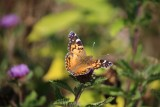 Butterfly Life Cycles Galleries