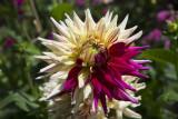 flowers_in_my_garden