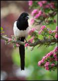 Recent BIRDS