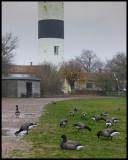 BIRDS in Ottenby & Southern Öland