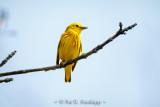 Sunny warbler