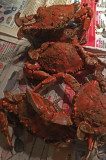 03 Chesapeake Bay blue crabs! 4503
