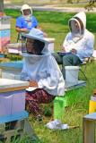 Bee-watch-7498