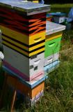 Bee-watch-7505