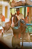 CUBA_2965 Transport