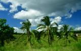 CUBA_3371 Roadside blur