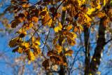 Saisons - Seasons