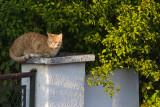 Chats - Cats - Katze