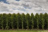 Iowa Images