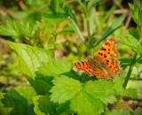 fluture-primavara-parcul-verdi-bucuresti.jpg