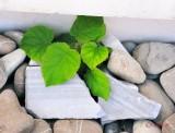 frunze-plante-verzi-pietre-bucuresti.jpg