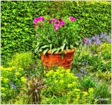 Tulips & Bluebells