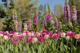 Tulips & Foxgloves