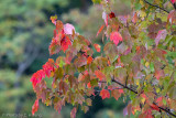 Early Autumn Color