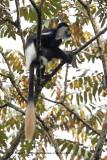 uganda_2016_mammals