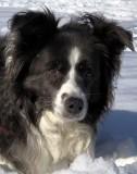 my_dog