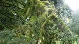 lichenmoss_on_tree